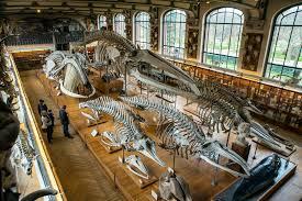 National museum of natural history Paris